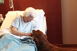 Patient with dog